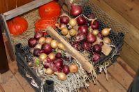 Pompoenen rode en gele ui